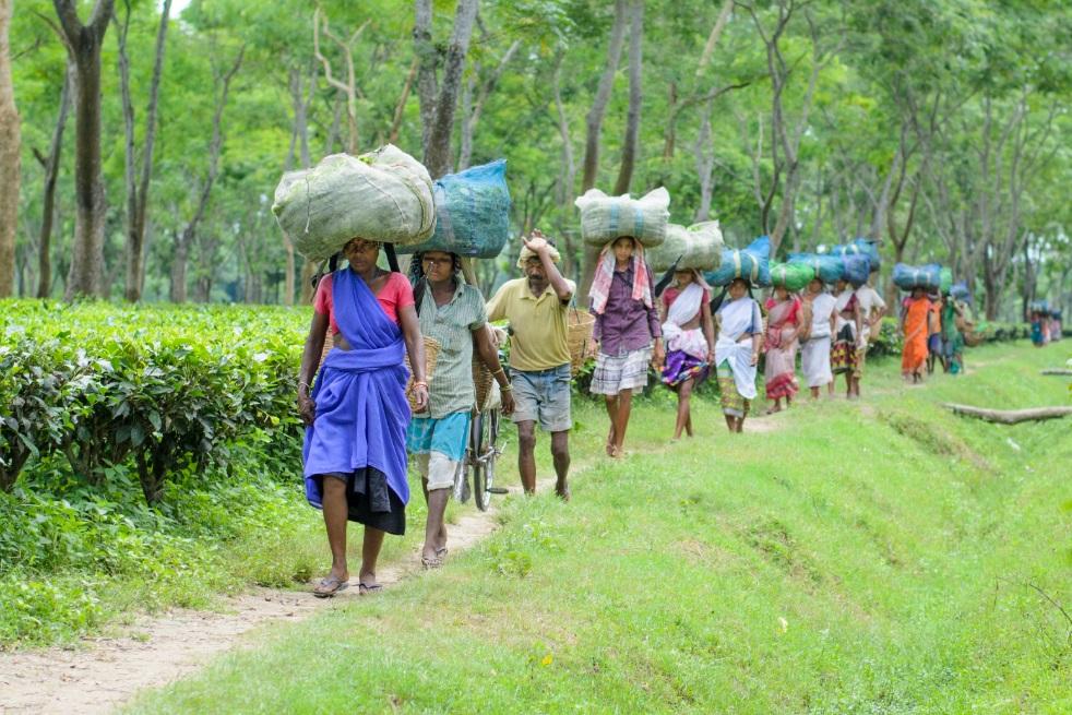 Tea workers strike