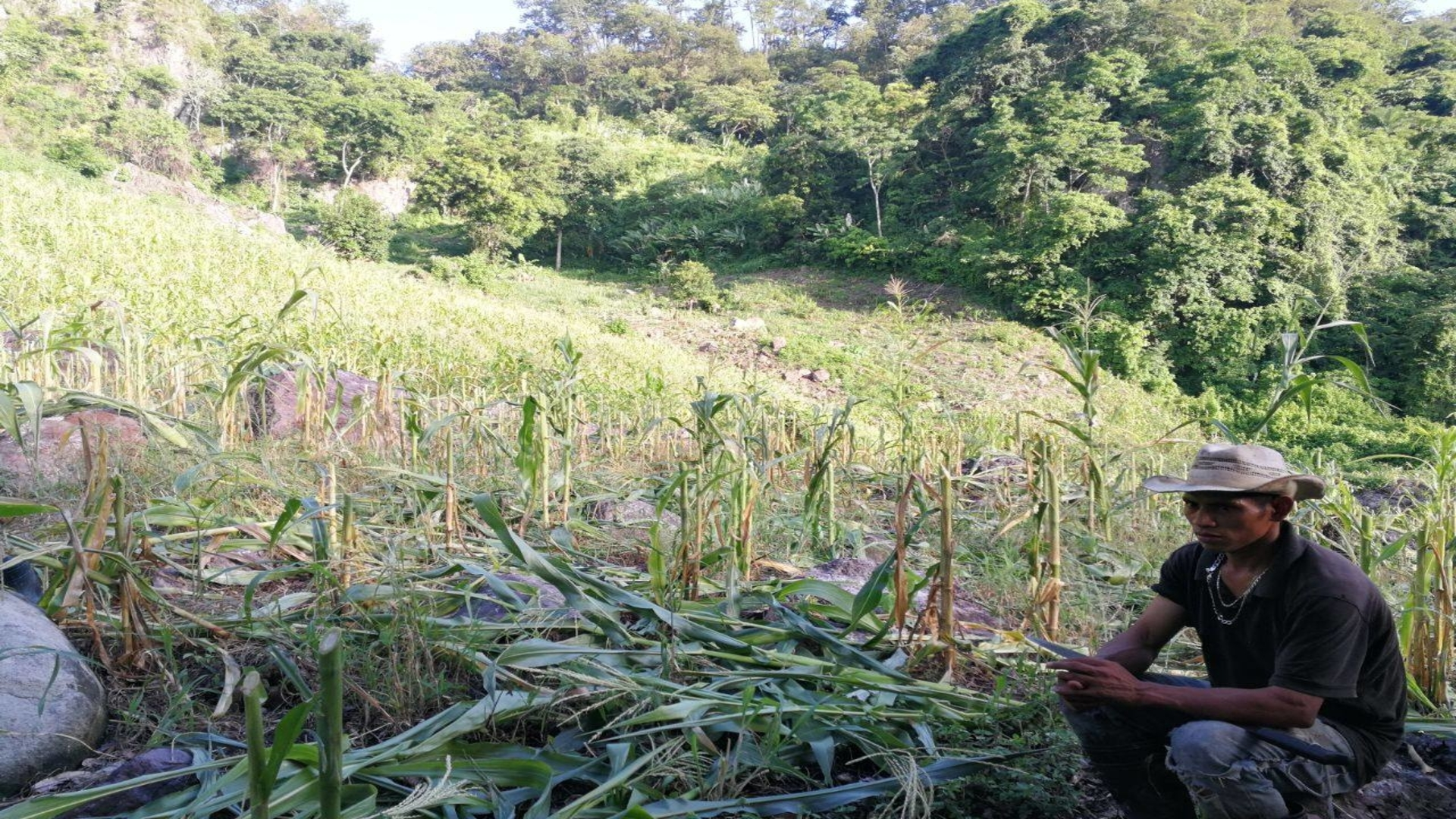 Who would destroy a community's food crops?