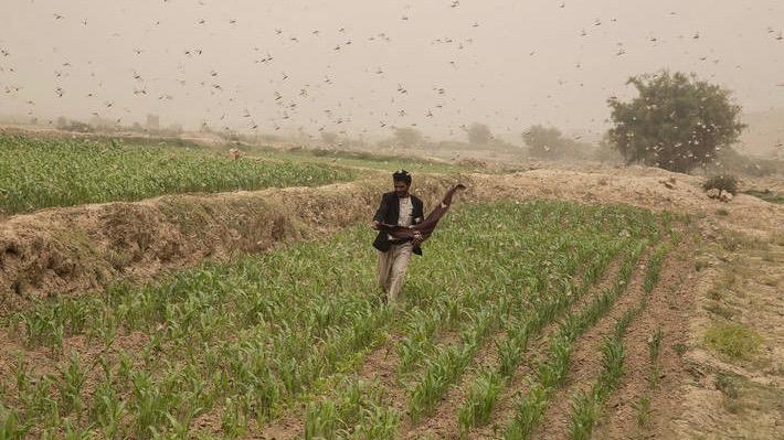 Food insecurity in Yemen Un report